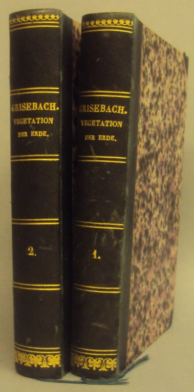 Grisebach
